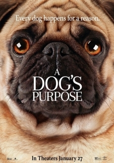 """A Dog's Purpose"" (2017) WEB-DL.x264-FGT"